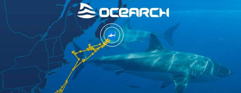 OCEARCH Poster of Shark